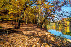 Forest along Lake in the autumn, HDR image Royalty Free Stock Image