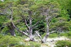 Forest at the Los Glaciares National Park, Argentina. Forest along the trail to Cerro Fitz Roy at the Los Glaciares National Park, Argentina. The park was Stock Images