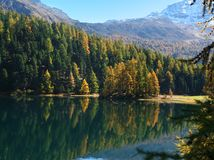 Forest in Alps Stock Images