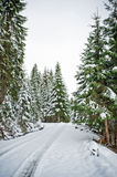 Forest In The Alps. In The Alps With Snow And Pinewood Stock Photo