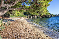 Forest and amazing sea, in Sithonia, Greece Stock Photo