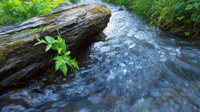 Free Forest And River Royalty Free Stock Photography - 51188297