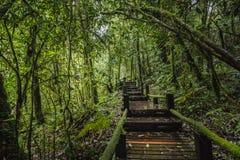 Forest At Ang Ka Nature slinga i Doi Inthanon Royaltyfri Foto