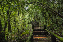 Forest At Ang Ka Nature-Spur in Doi Inthanon Lizenzfreies Stockfoto