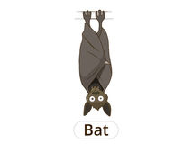 Forest animal bat cartoon vector illustration Stock Photography