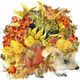 Forest animal hedgehog, Autumn nature colorful leaves background , fruit, berries, mushrooms, yellow leaves, rose hips on black ba Stock Images