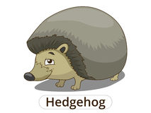 Forest animal hedgehog cartoon vector illustration Royalty Free Stock Photo