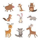 Forest Animals Collection Stock Photography