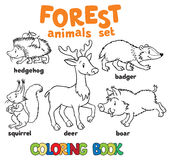 Forest animals coloring book Stock Photography