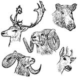 Forest animals. Five forest animals vector illustration Royalty Free Stock Photo