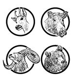 Forest animals rings 1. Four forest animals in the rings Royalty Free Stock Photography