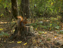 Forest animals: Squirrel and bird Stock Photos