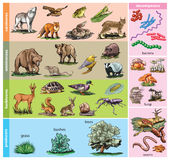 Forest animals. Vector illustration of Forest animals compared to diet Stock Photos