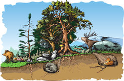 Forest animals. Vector illustration of some forest animals habitat Royalty Free Stock Image