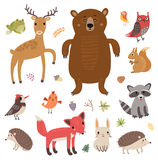 Forest animals. Vector set. Collection of cute characters. Royalty Free Stock Image