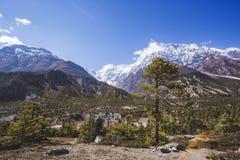 Forest on Annapurna circuit trek. Himalayan mountains. Nepal. Fir tree forest. Annapurna circuit trek. Himalayan mountains of Nepal royalty free stock image