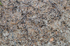 Forest anthill. Ant hill in the forest closeup Royalty Free Stock Photography