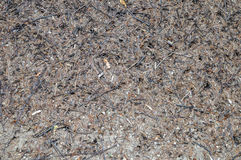 Forest anthill. Ant hill in the forest closeup Stock Images