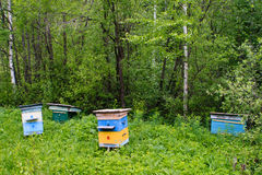 Forest apiary Royalty Free Stock Photos