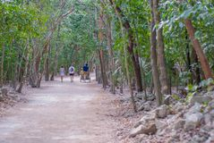 Forest of the archaeological area of Coba royalty free stock images