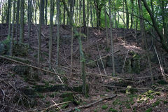 Forest in Ardennes Royalty Free Stock Photography
