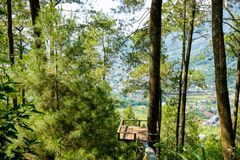 Forest area of Batu, Indonesia. Batu Malang, East Java, Indonesia - April 2018 : Area of Place name Omah Kayu, top hill in batu with tree house building by high stock photos