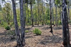 Forest area at jhargram west bengal