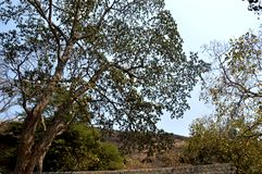 Forest area in Mumbai india. royalty free stock photography