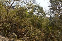 Forest area in Mumbai india. royalty free stock image