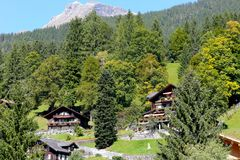 Forest areas and houses and hotel. Grindelwald, Switzerland - September 21, 2017: Forest areas and big trees on the slope and among them some hidden houses and royalty free stock photos