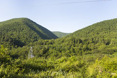 Forest around North Caucasus mountain river in spring Royalty Free Stock Image