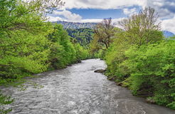 Forest around North Caucasus mountain river. Spring view Stock Photo