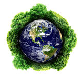 Forest around plant Earth Stock Images