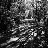 Forest Artistic blick i svartvitt Arkivfoto