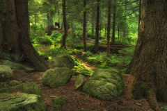 Forest. As a background. Natural summer landscape Royalty Free Stock Photo