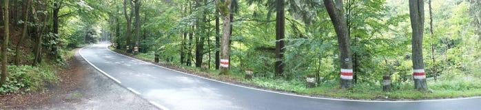 Forest Asphalt Road Stockbild