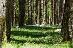 Forest in Aspromonte Royalty Free Stock Image