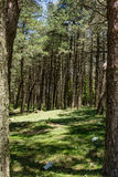 Forest in Aspromonte Royalty Free Stock Photo