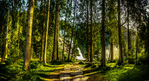 Forest. In Austria with a waterfall in the background Royalty Free Stock Image