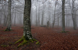 Forest at autum Royalty Free Stock Image