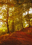 The forest in autumn Stock Photo