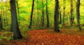 The forest in autumn Stock Photography