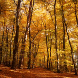 Forest in Autumn stock image