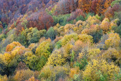Forest in autumn. The colors of the trees in autumn Royalty Free Stock Image