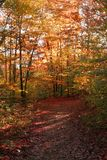 Forest in autumn. A path in a forest in autumn Royalty Free Stock Image