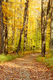 Forest in autumn Royalty Free Stock Images