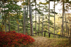 The forest at autumn stock photos