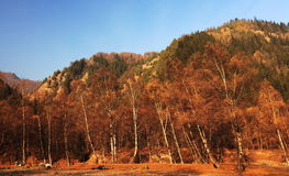 Forest autumn. Mutual Beishan National Forest Geopark is located in the south eastern end of the Qilian Mountains, with an average altitude of 1,800 meters, the Royalty Free Stock Image