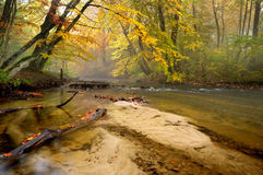 Forest autumn Royalty Free Stock Images