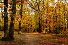 Forest in autumn. With a way Stock Images